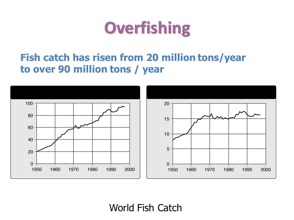 Overfishing Fish catch has risen from 20 million tons/year to over 90 million tons / year.
