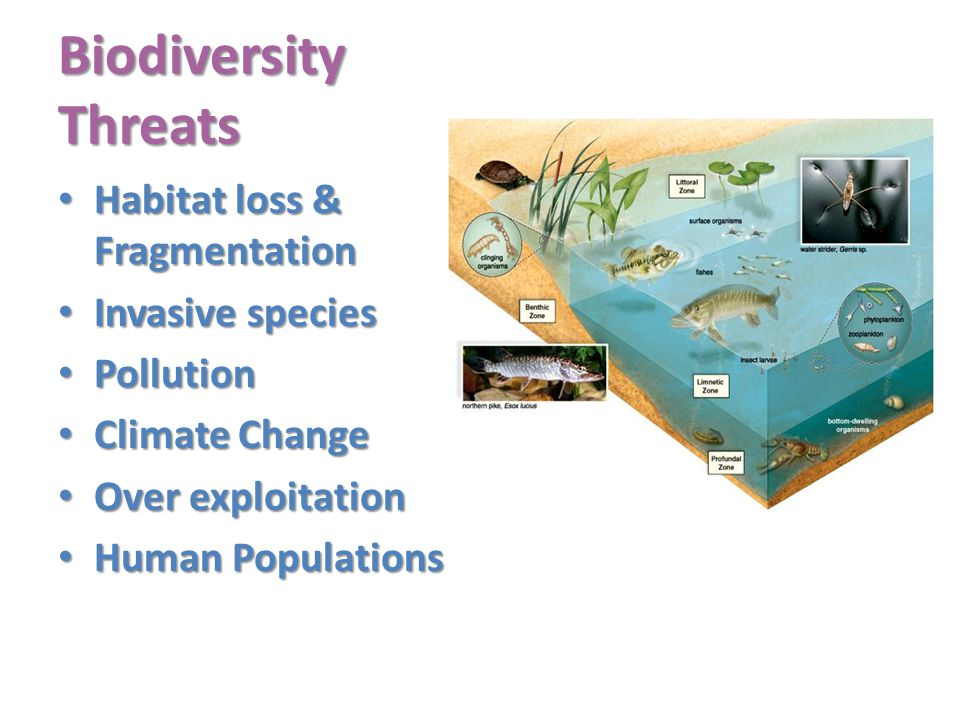 Biodiversity Threats Habitat loss & Fragmentation Invasive species