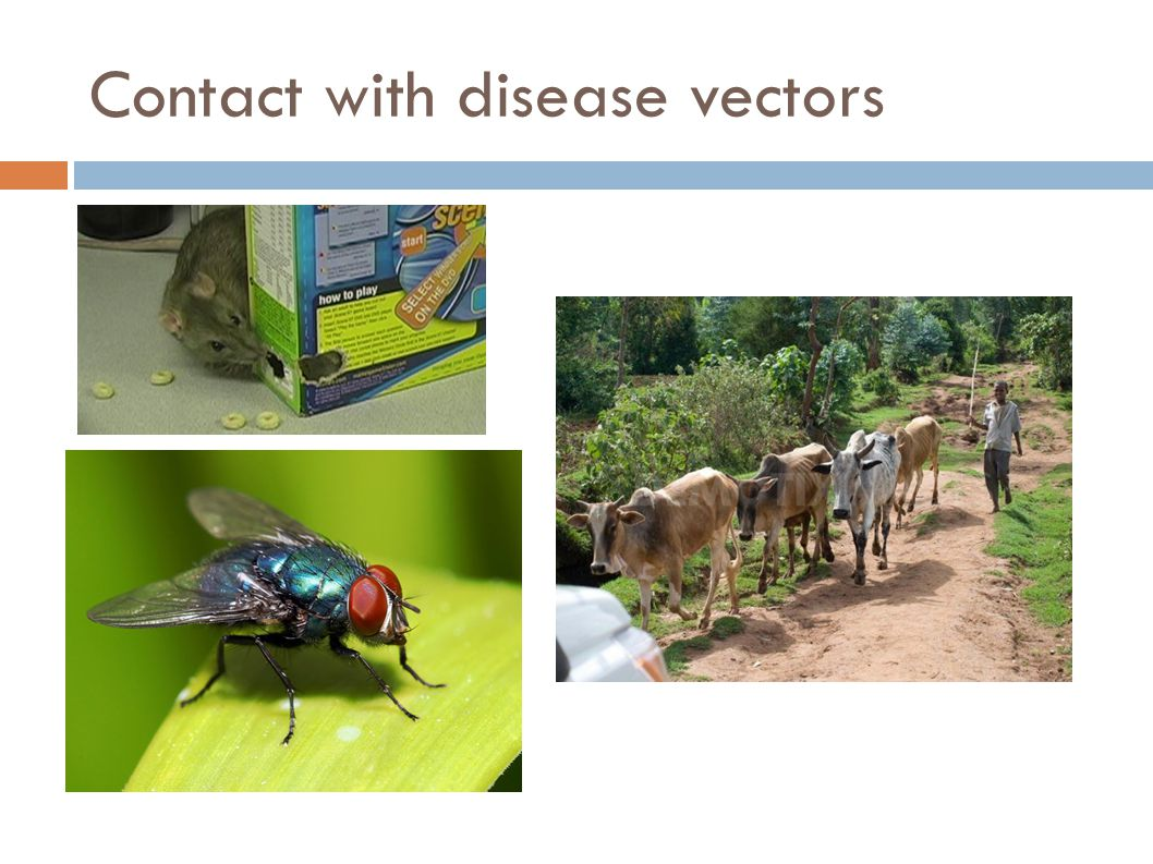 Contact with disease vectors