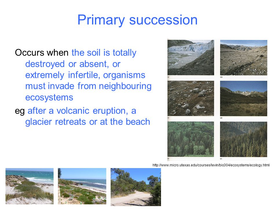 Primary succession Occurs when the soil is totally destroyed or absent, or extremely infertile, organisms must invade from neighbouring ecosystems.