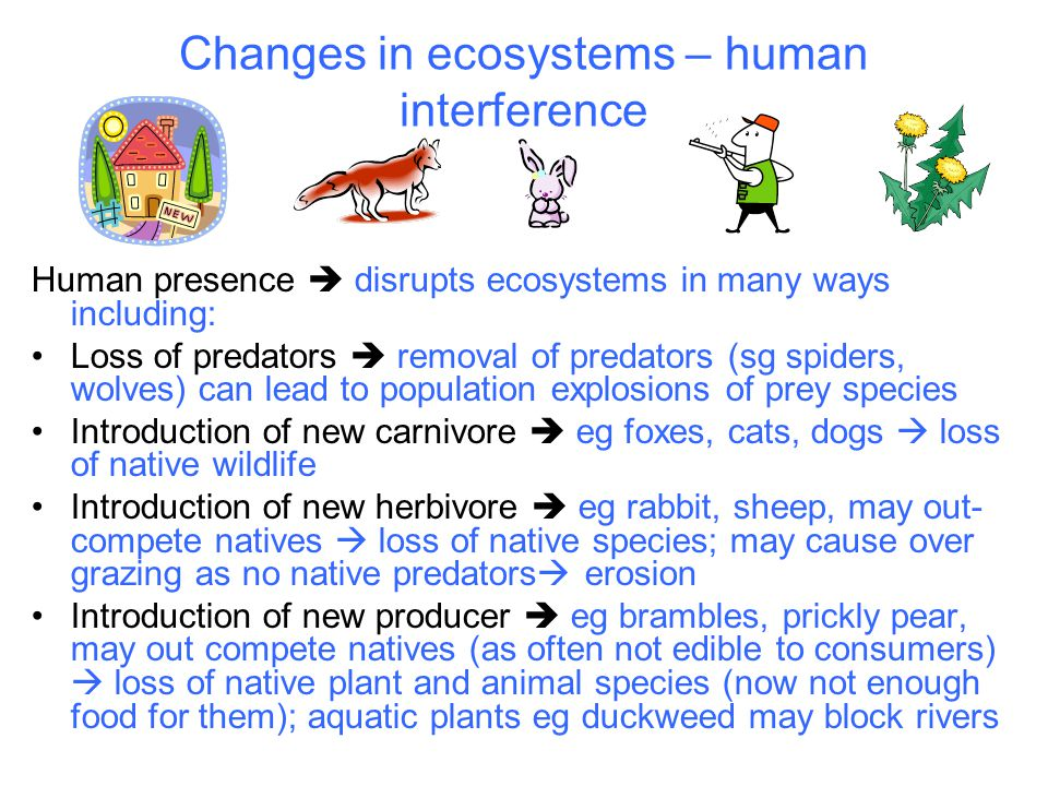 Changes in ecosystems – human interference