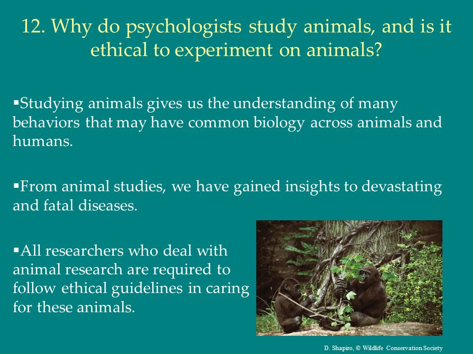 12. Why do psychologists study animals, and is it ethical to experiment on animals