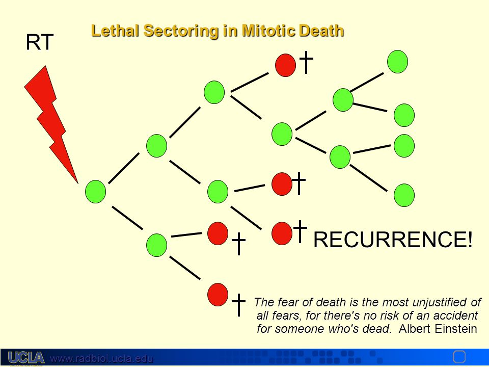 RT RECURRENCE! Lethal Sectoring in Mitotic Death