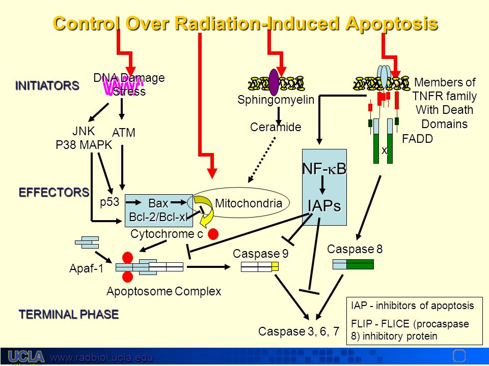 Control Over Radiation-Induced Apoptosis