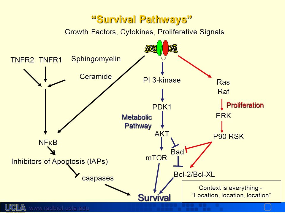 Survival Pathways Survival