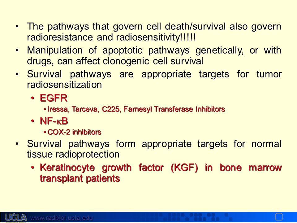 Survival pathways are appropriate targets for tumor radiosensitization
