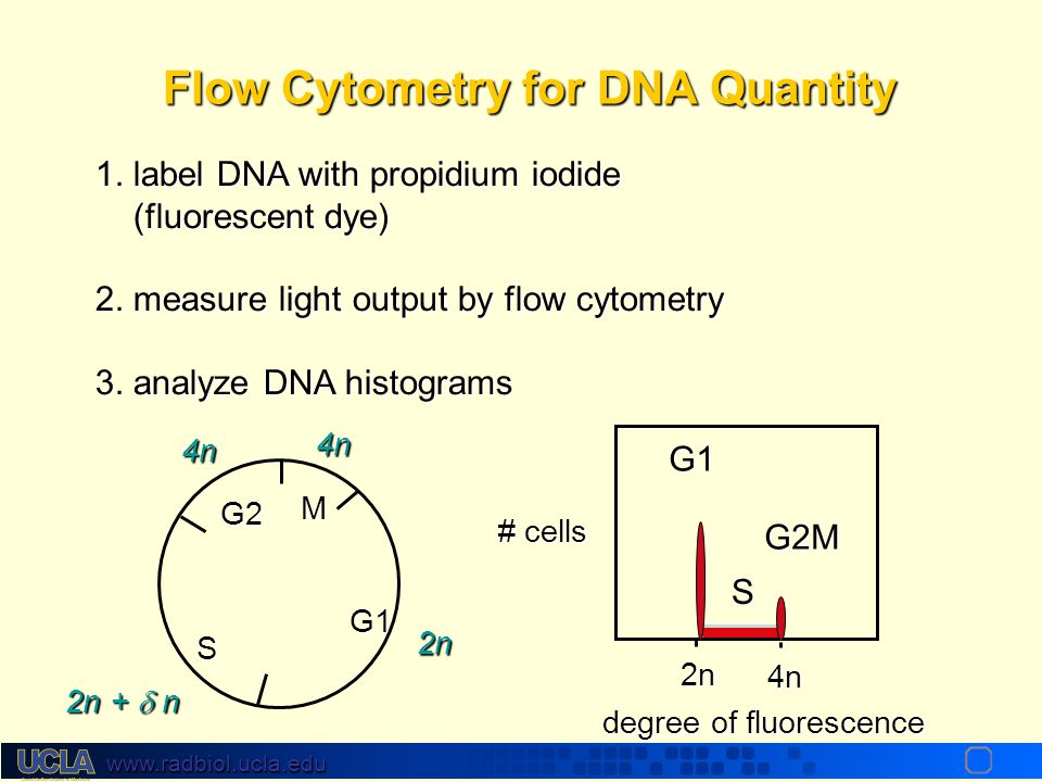 Flow Cytometry for DNA Quantity