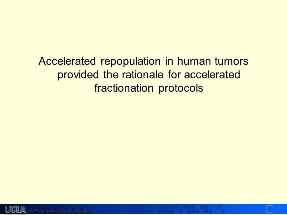 Accelerated repopulation in human tumors provided the rationale for accelerated fractionation protocols