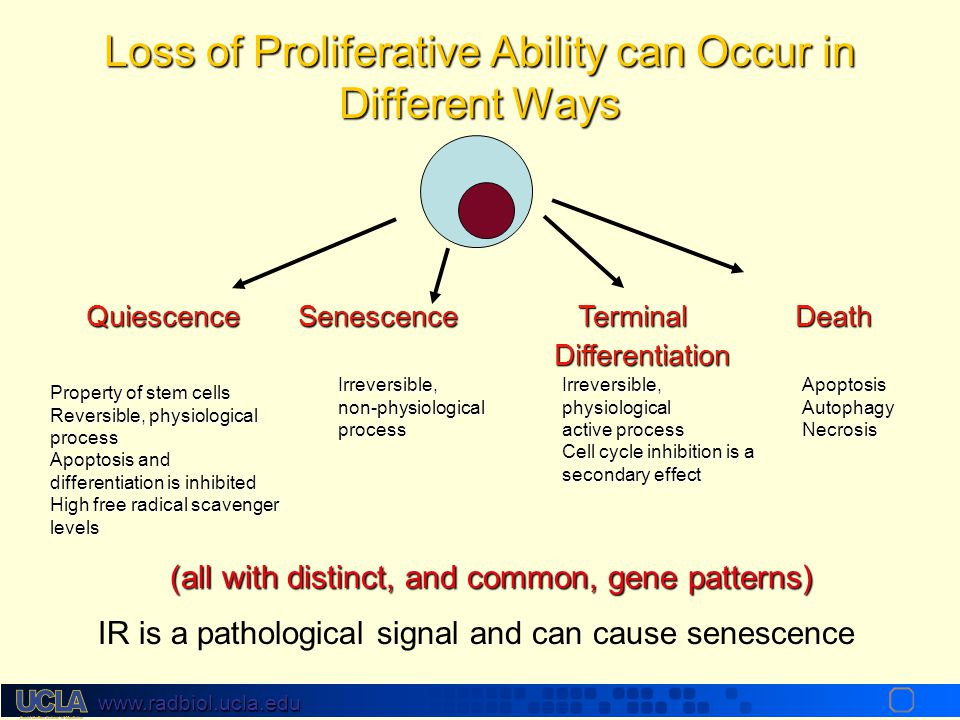 Loss of Proliferative Ability can Occur in Different Ways