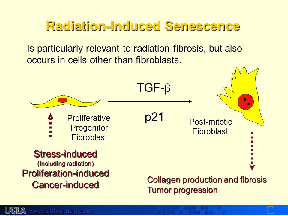 Radiation-Induced Senescence