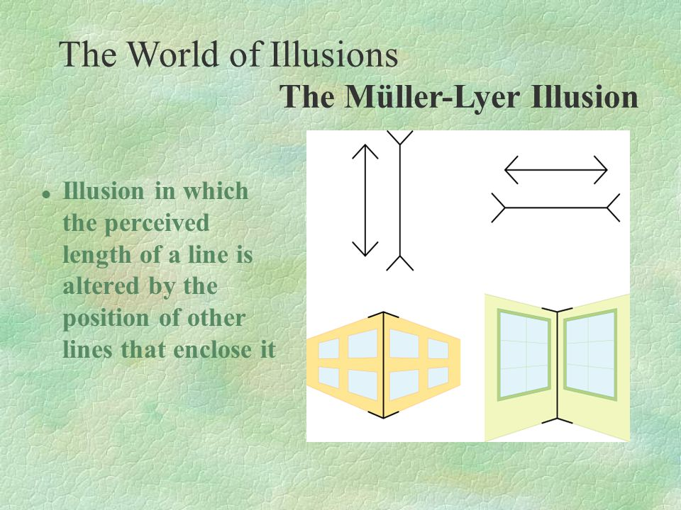 The World of Illusions The Müller-Lyer Illusion