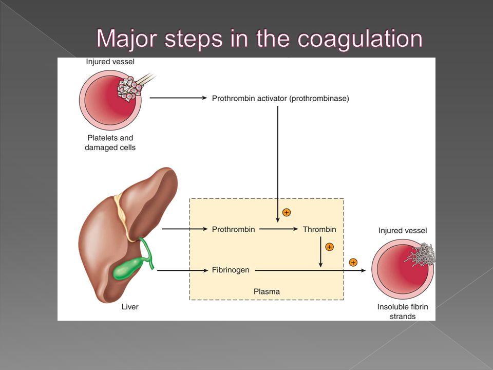 Major steps in the coagulation cascade