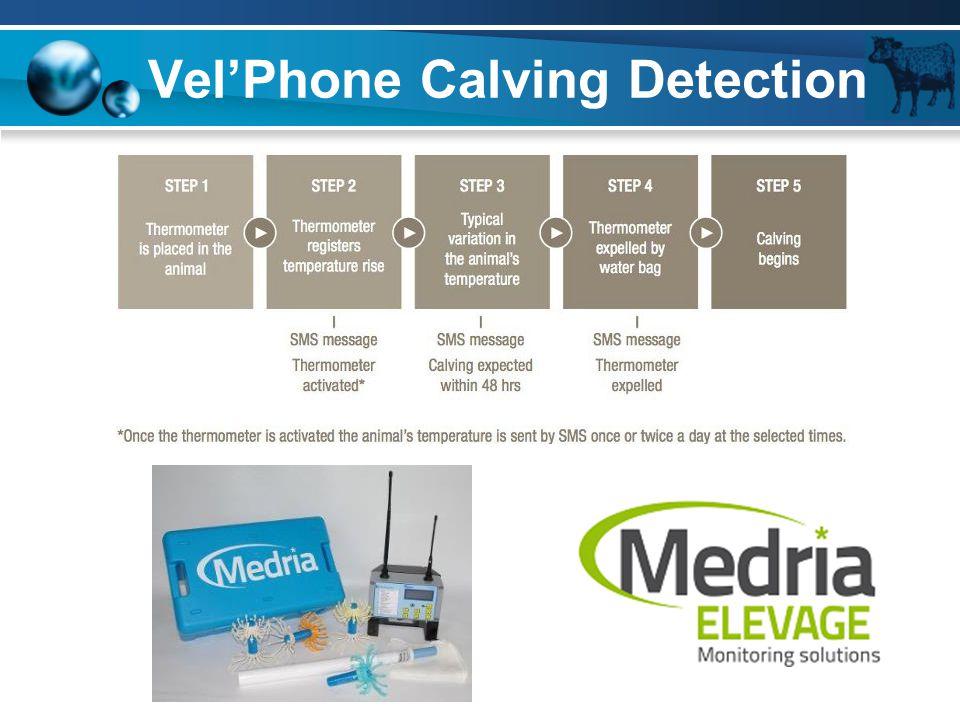 Vel'Phone Calving Detection