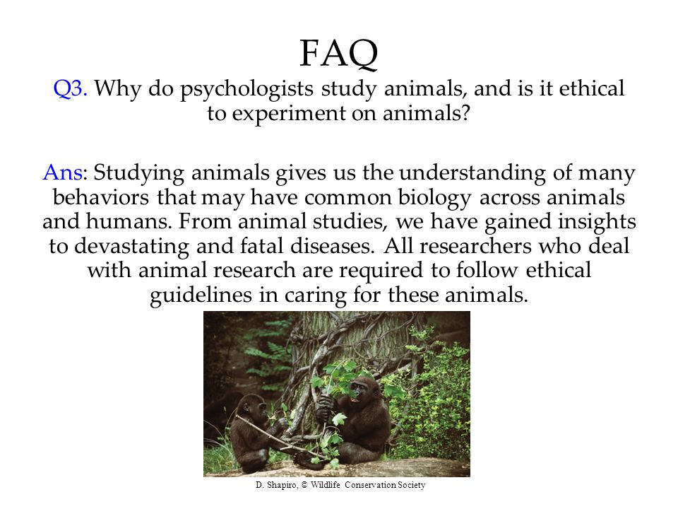 FAQ Q3. Why do psychologists study animals, and is it ethical to experiment on animals