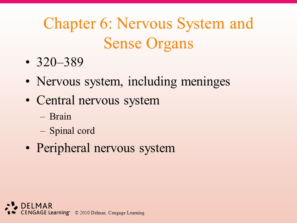Chapter 6: Nervous System and Sense Organs