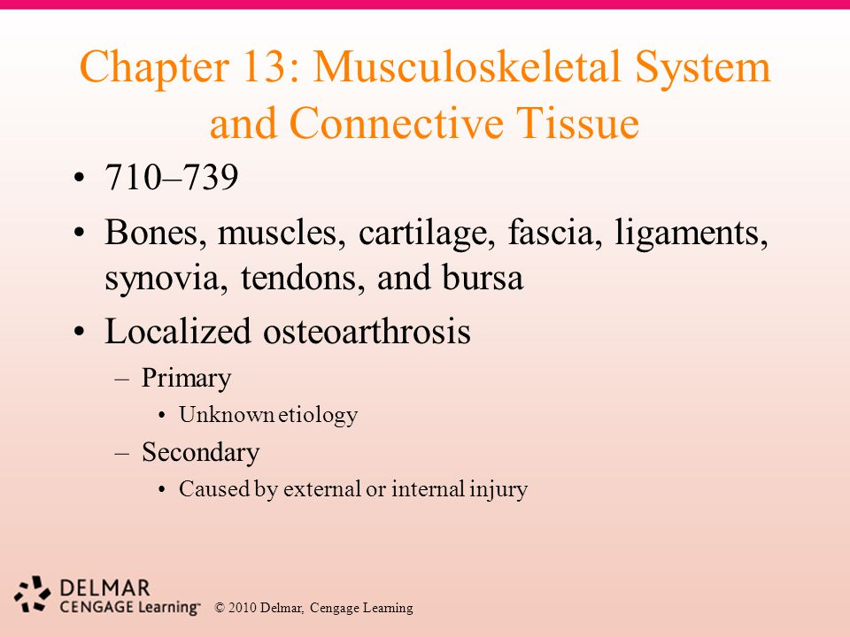 Chapter 13: Musculoskeletal System and Connective Tissue