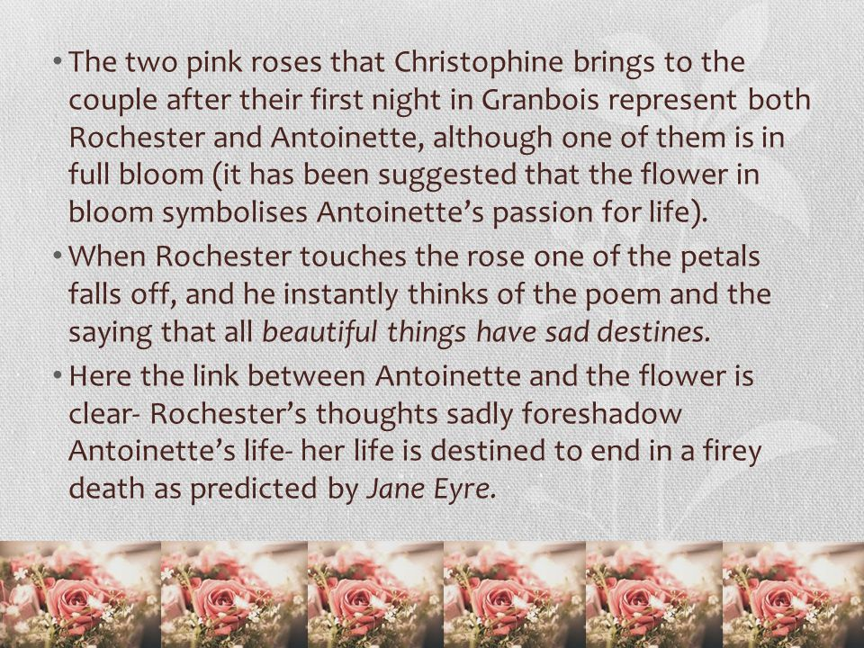 The two pink roses that Christophine brings to the couple after their first night in Granbois represent both Rochester and Antoinette, although one of them is in full bloom (it has been suggested that the flower in bloom symbolises Antoinette's passion for life).