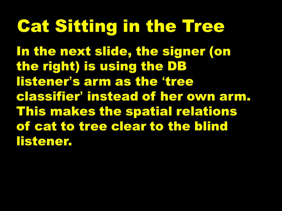 Cat Sitting in the Tree