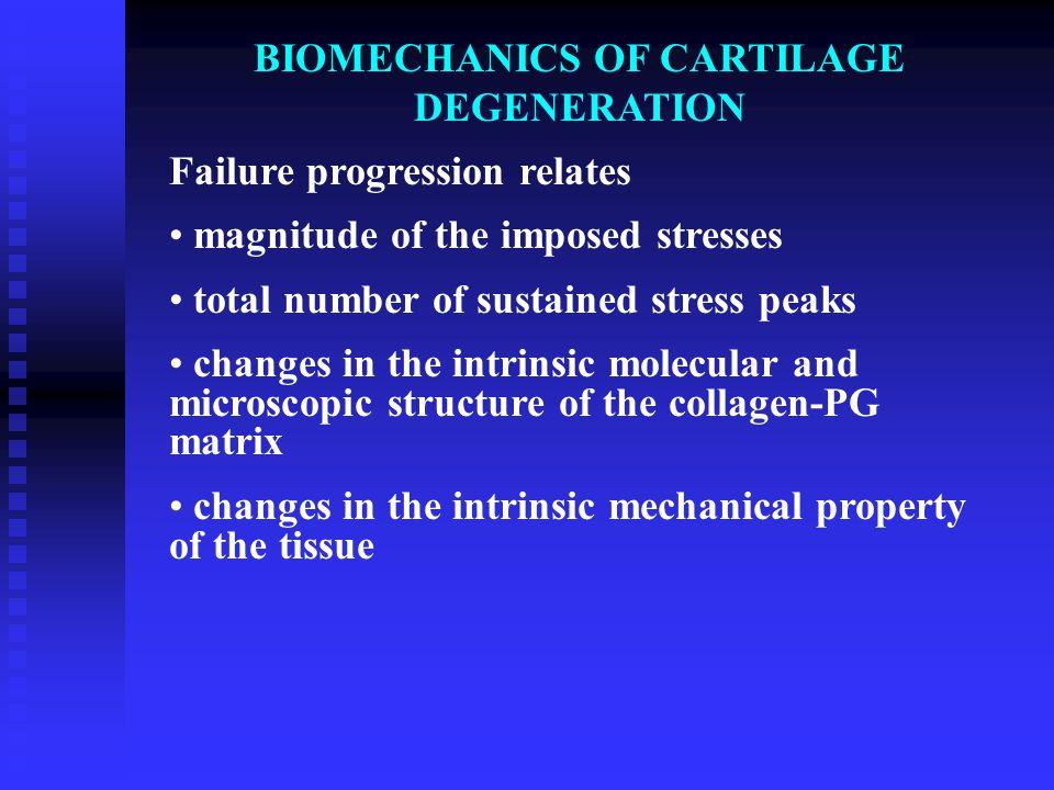 BIOMECHANICS OF CARTILAGE DEGENERATION