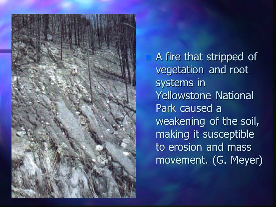 A fire that stripped of vegetation and root systems in Yellowstone National Park caused a weakening of the soil, making it susceptible to erosion and mass movement.