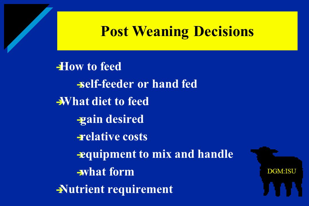 Post Weaning Decisions