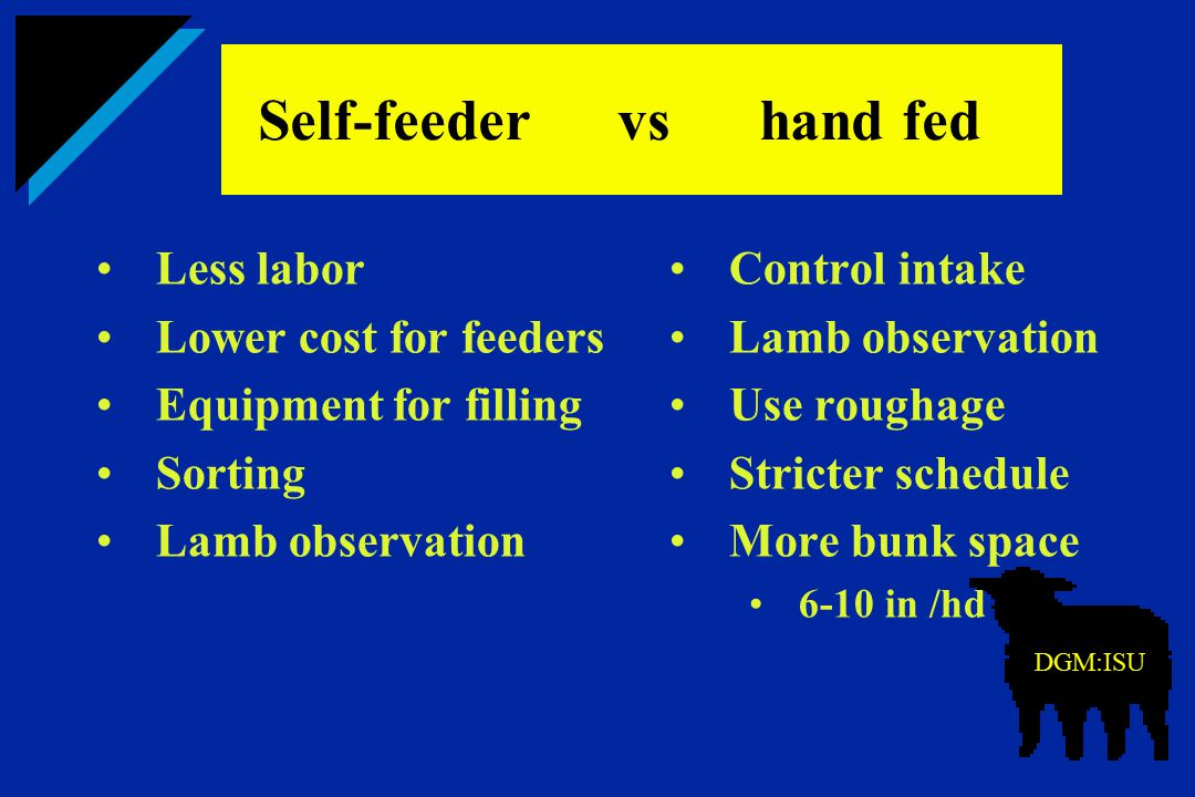 Self-feeder vs hand fed