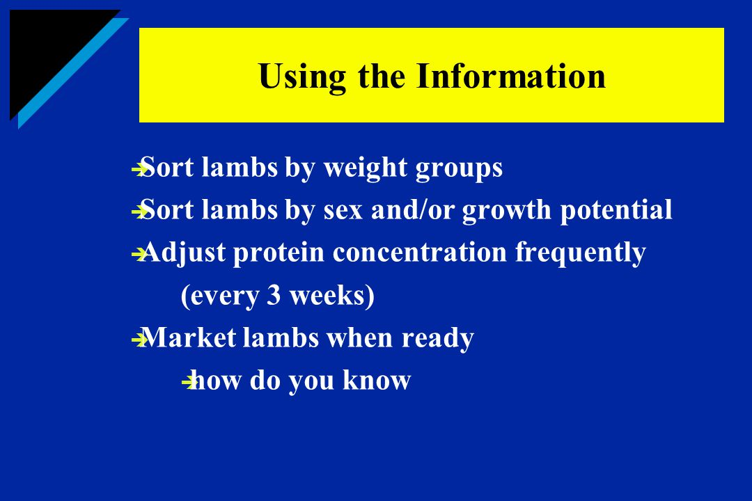 Using the Information Sort lambs by weight groups
