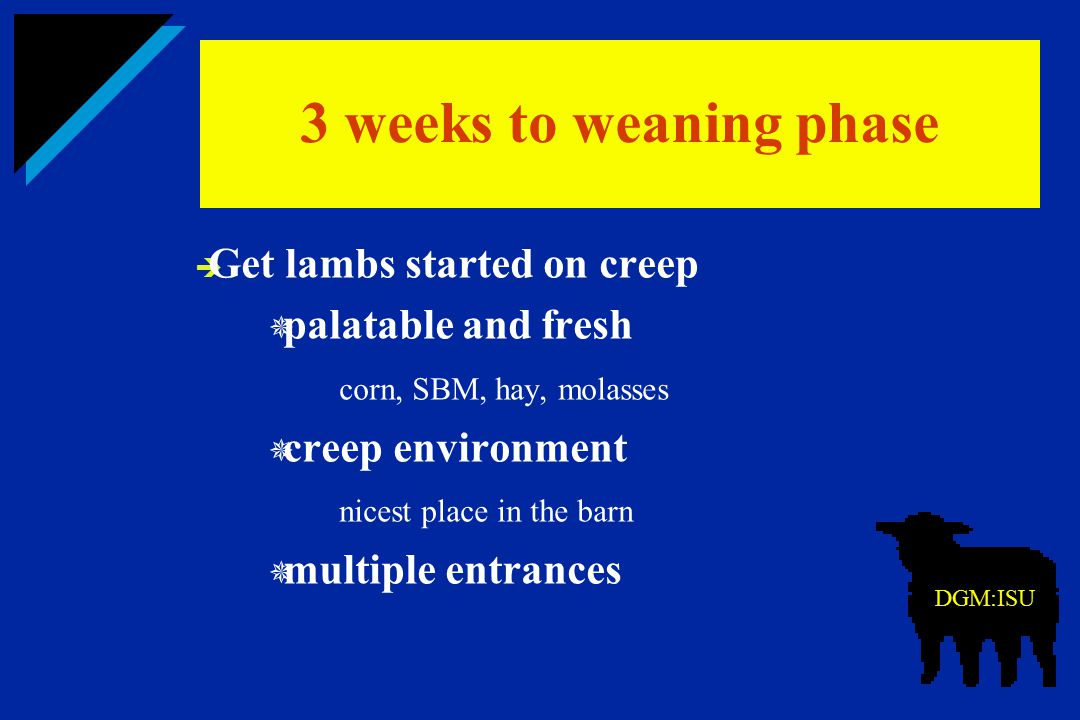 3 weeks to weaning phase Get lambs started on creep