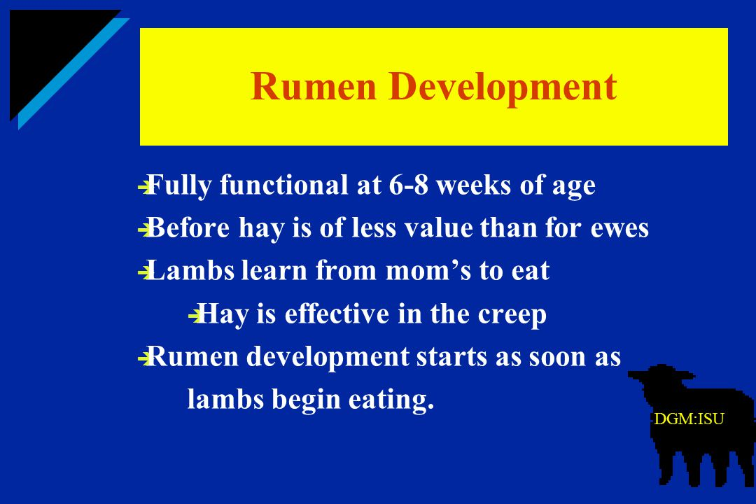 Rumen Development Fully functional at 6-8 weeks of age