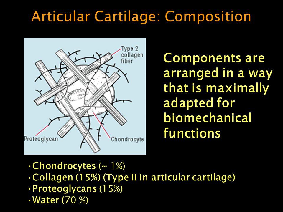 Articular Cartilage: Composition