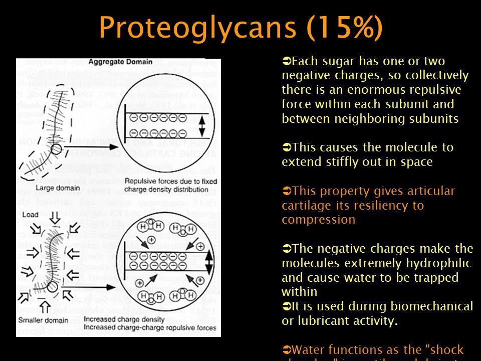 Proteoglycans (15%)