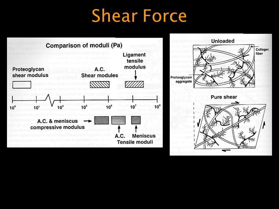 Shear Force