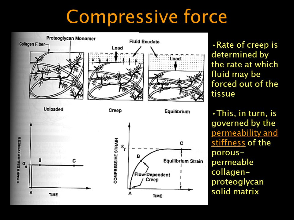 Compressive force Rate of creep is determined by the rate at which fluid may be forced out of the tissue.