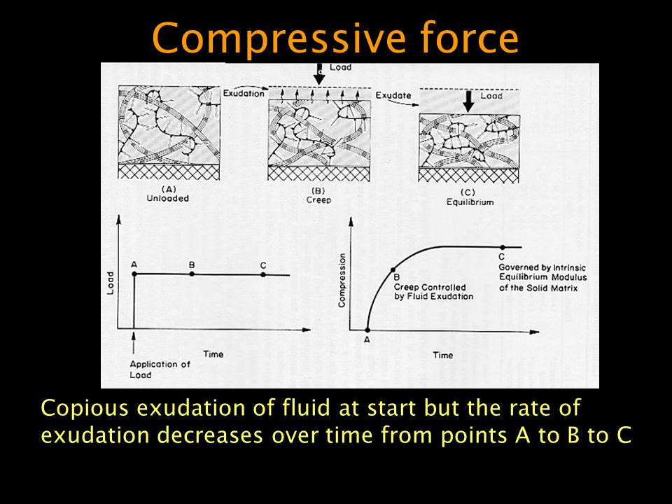 Compressive force Copious exudation of fluid at start but the rate of exudation decreases over time from points A to B to C.