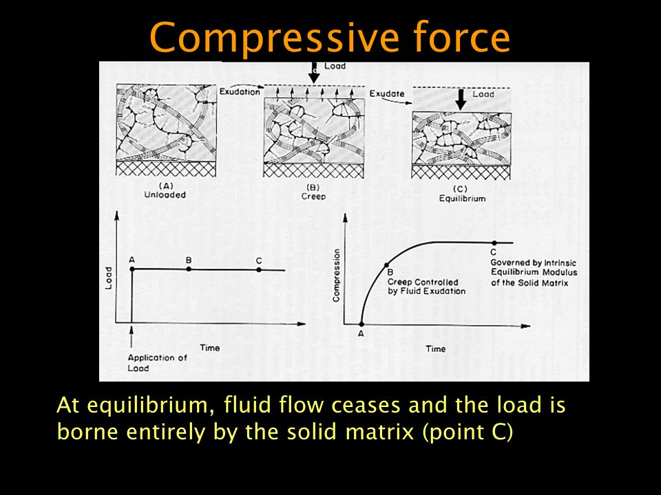 Compressive force At equilibrium, fluid flow ceases and the load is borne entirely by the solid matrix (point C)