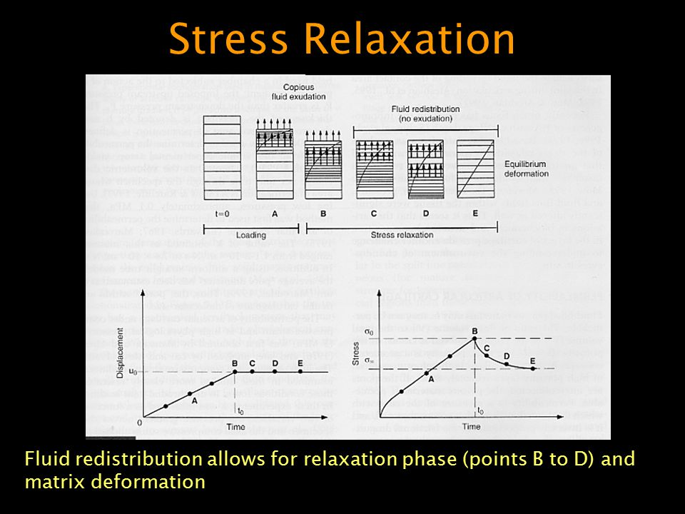 Stress Relaxation Fluid redistribution allows for relaxation phase (points B to D) and matrix deformation.
