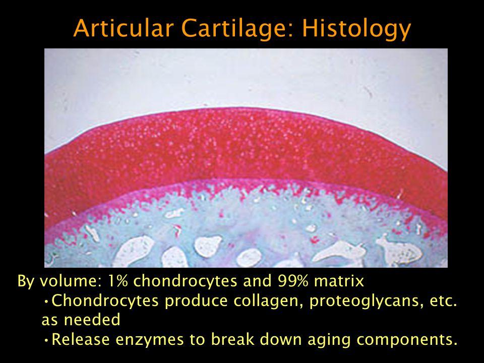 Articular Cartilage: Histology