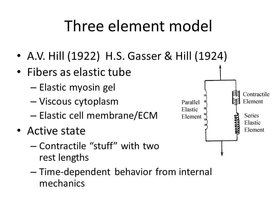 Three element model A.V. Hill (1922) H.S. Gasser & Hill (1924)