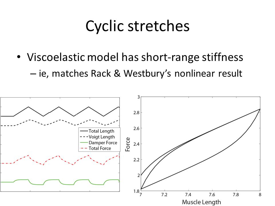 Cyclic stretches Viscoelastic model has short-range stiffness