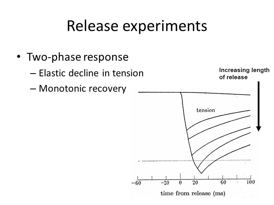 Release experiments Two-phase response Elastic decline in tension