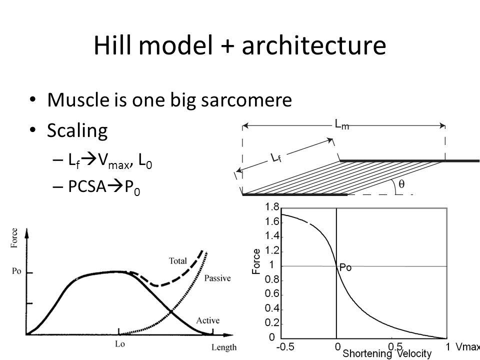 Hill model + architecture