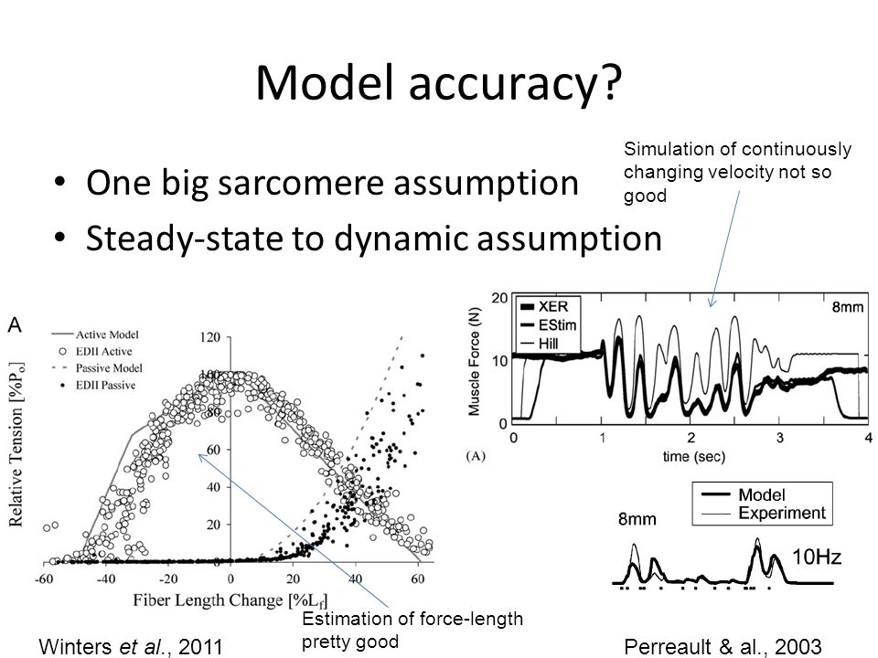 Model accuracy One big sarcomere assumption