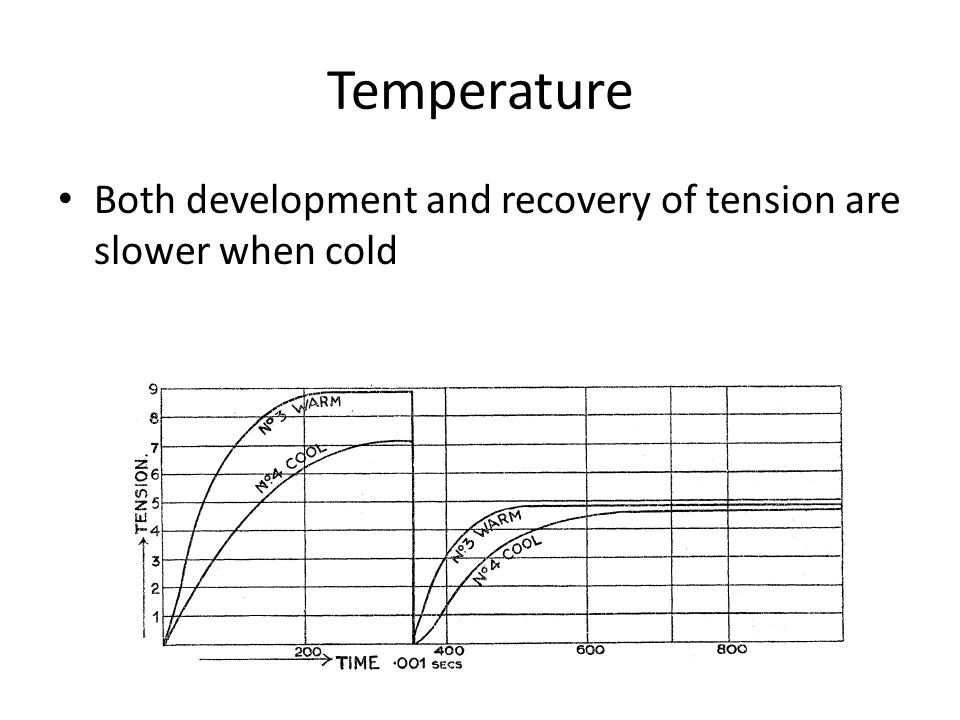 Temperature Both development and recovery of tension are slower when cold