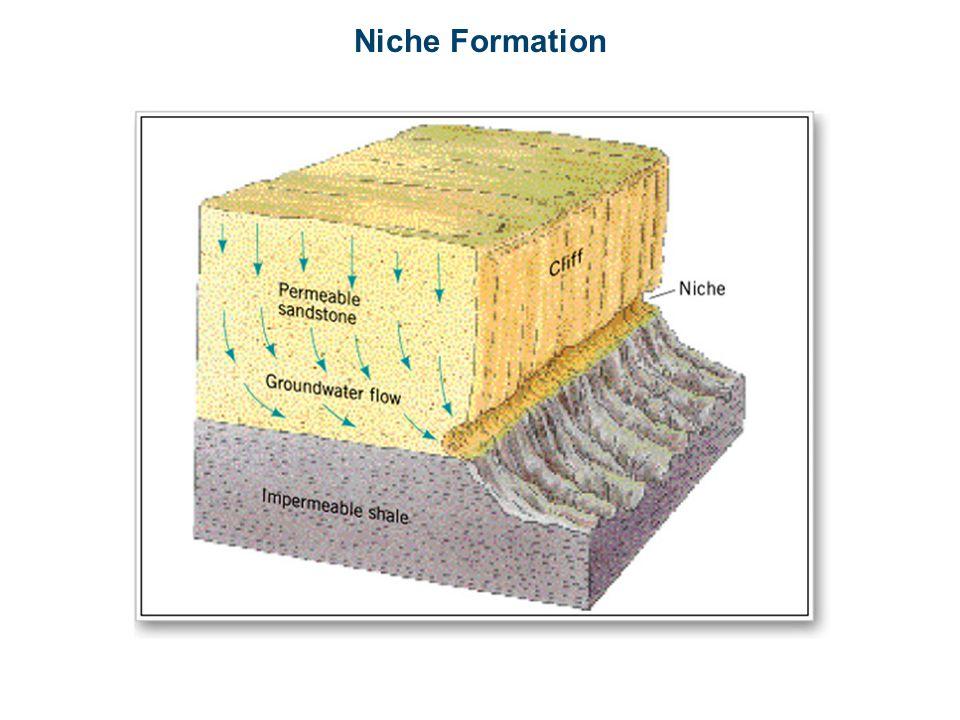 Niche Formation