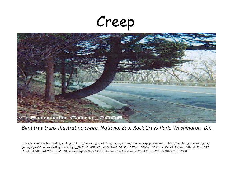 Creep Bent tree trunk illustrating creep. National Zoo, Rock Creek Park, Washington, D.C.
