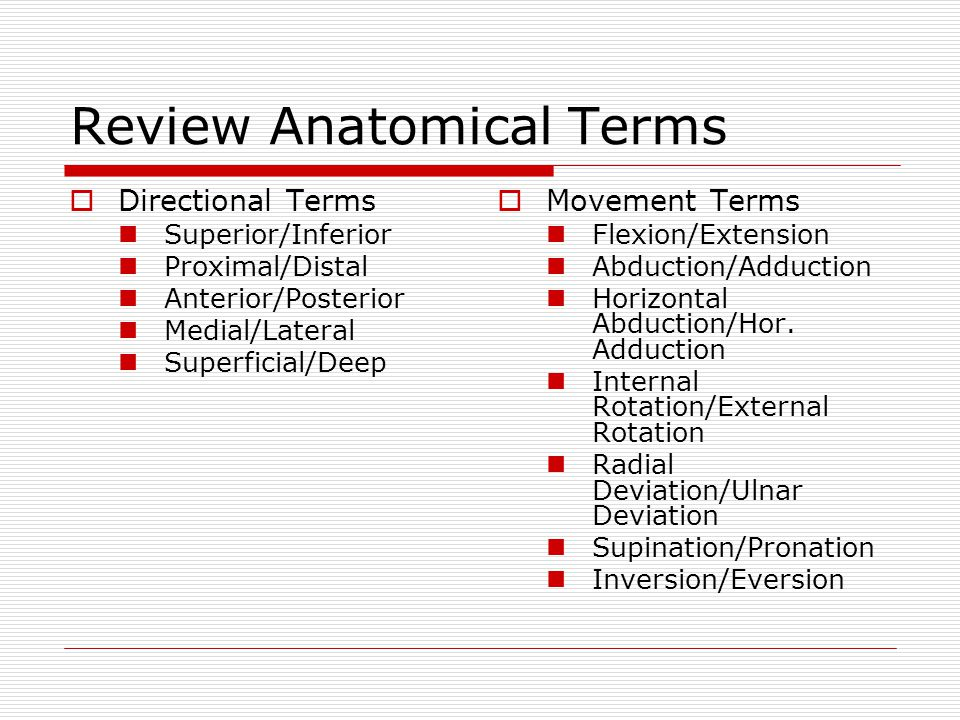Review Anatomical Terms