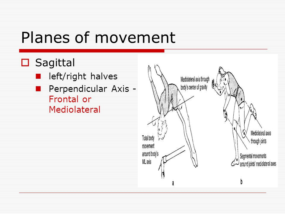Planes of movement Sagittal left/right halves