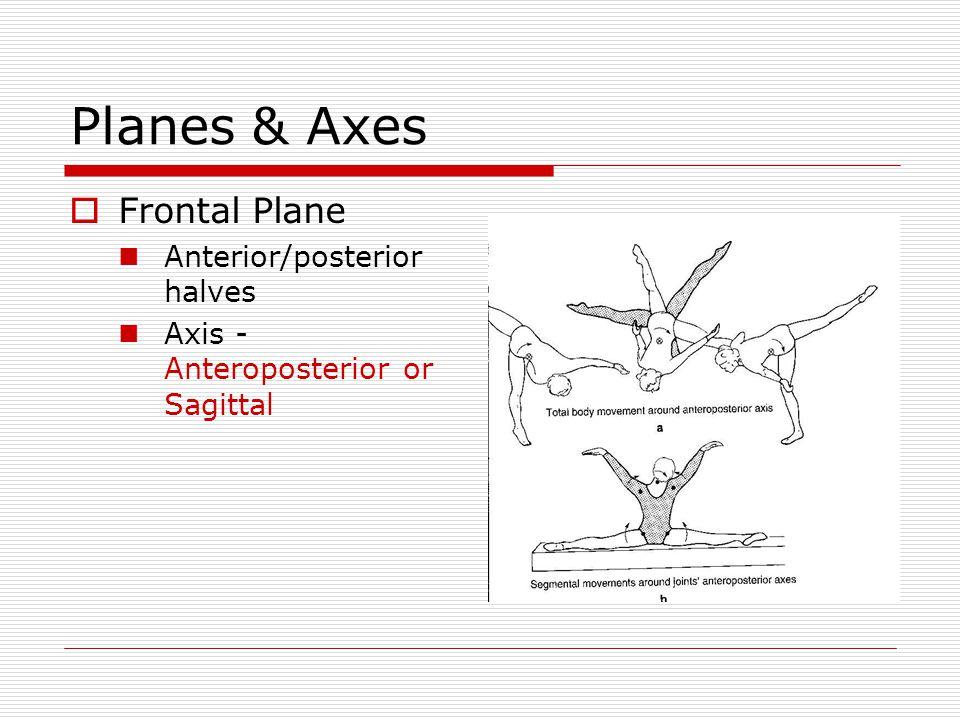 Planes & Axes Frontal Plane Anterior/posterior halves