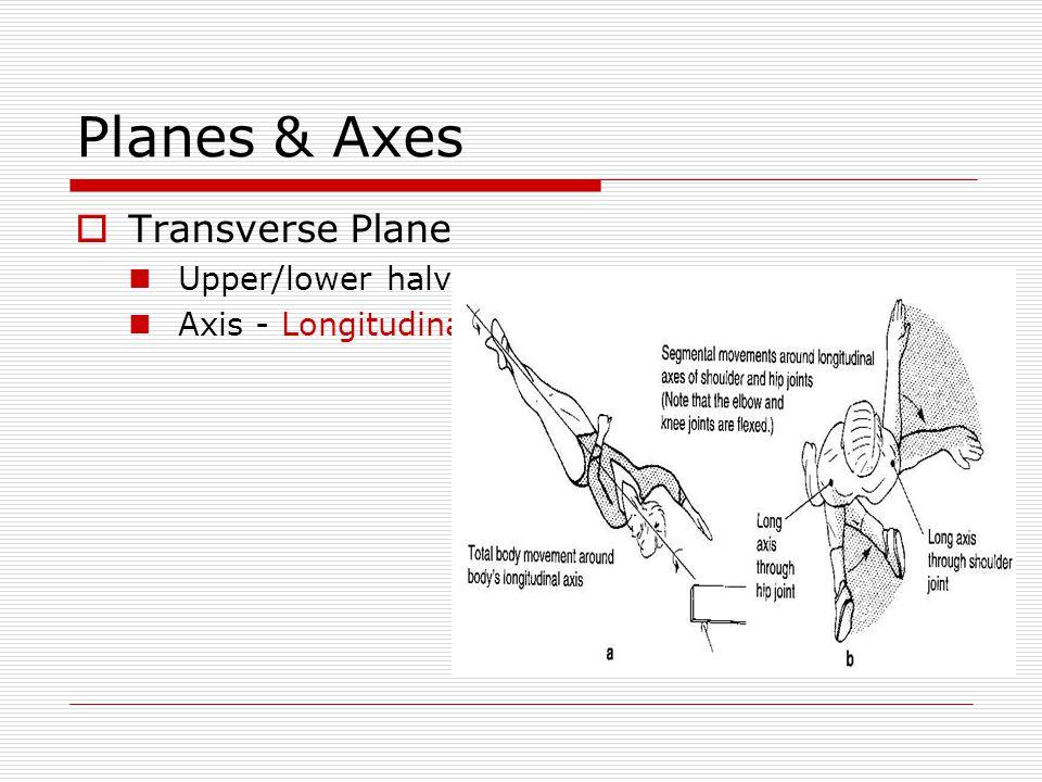 Planes & Axes Transverse Plane Upper/lower halves Axis - Longitudinal