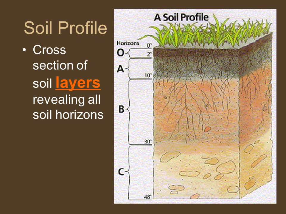 Soil Profile Cross section of soil layers revealing all soil horizons
